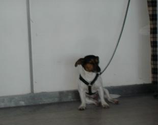 アメリカの犬_f0038600_22215851.jpg