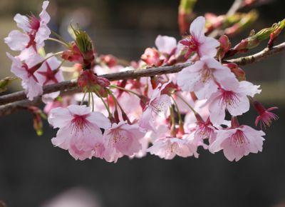 昭和記念公園_d0148902_9244375.jpg
