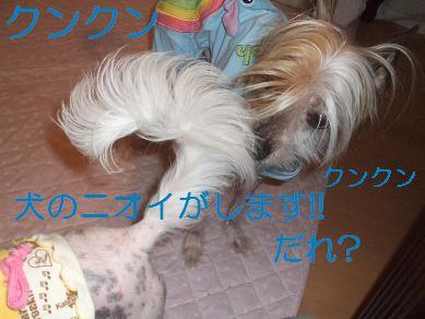 f0179203_193924100.jpg