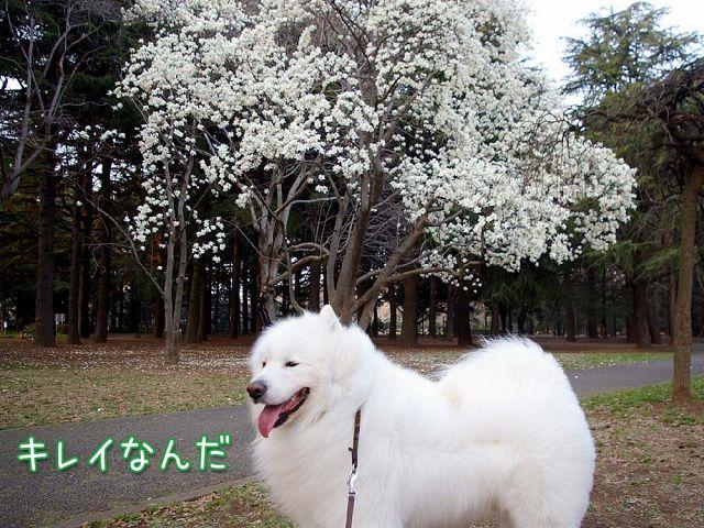 ウマウマおっきな公園_c0062832_18443616.jpg