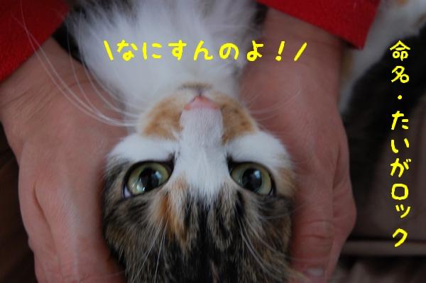 c0181639_143681.jpg