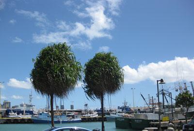 Nico\'s pier 38_c0196240_1226795.jpg