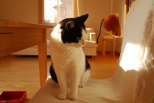 チュー猫喜ぶ_c0181457_1223481.jpg