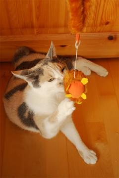 チュー猫喜ぶ_c0181457_1231965.jpg