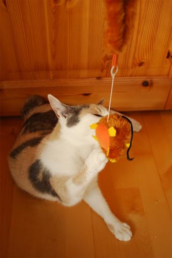 チュー猫喜ぶ_c0181457_1232946.jpg