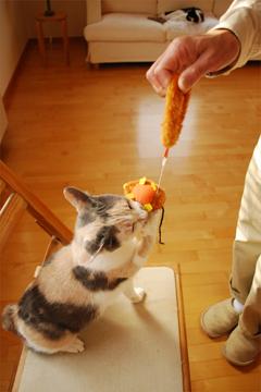 チュー猫喜ぶ_c0181457_1233926.jpg