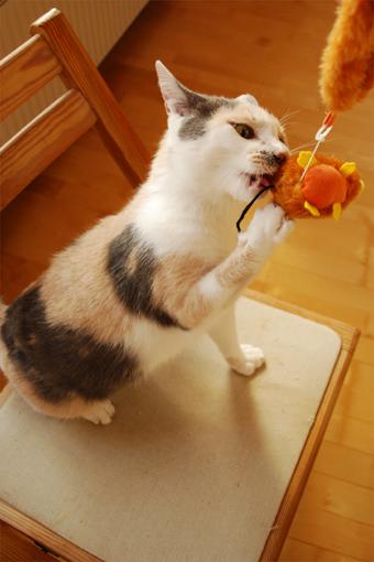 チュー猫喜ぶ_c0181457_1235285.jpg