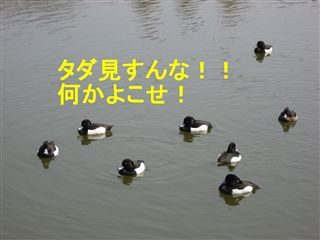e0121589_1411527.jpg