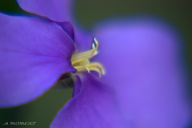 紫の衣をまとう春_f0147895_22383341.jpg