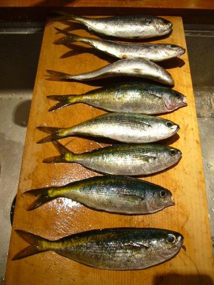 ゆる〜い白身魚、タカベ_a0116902_22104746.jpg