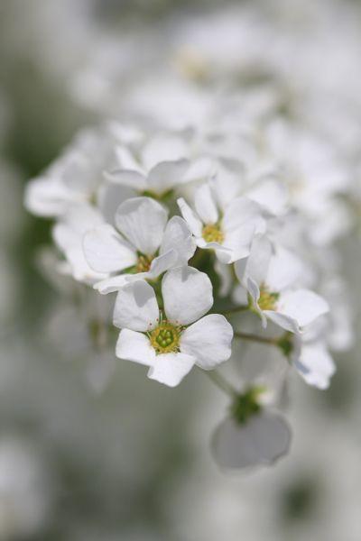 庭のお花_d0148902_19232330.jpg