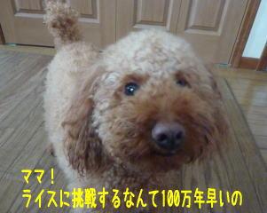 b0151505_1626481.jpg