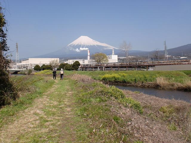沼川 春のお花見ウォーク その2_f0141310_230273.jpg