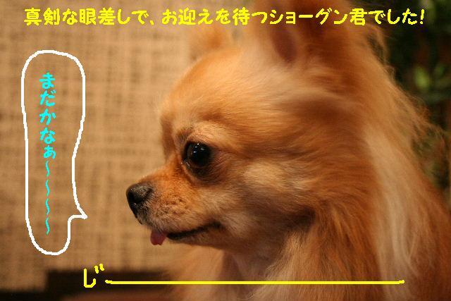 b0130018_12135440.jpg