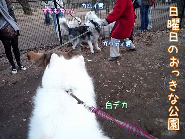大きな甘ったれ_c0062832_1843531.jpg