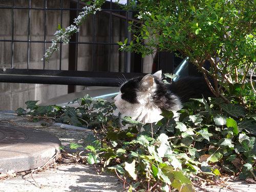 東向島で見た猫_e0089232_11232628.jpg