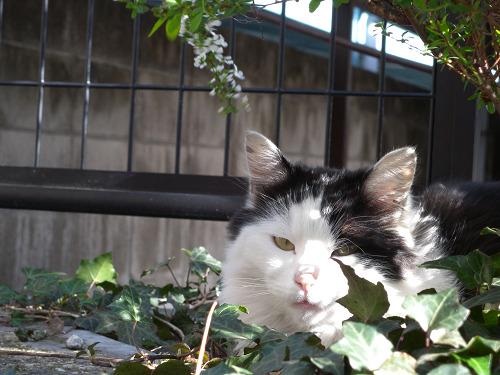 東向島で見た猫_e0089232_1123324.jpg