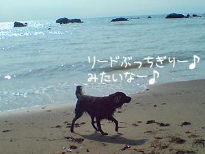 f0095047_18411121.jpg