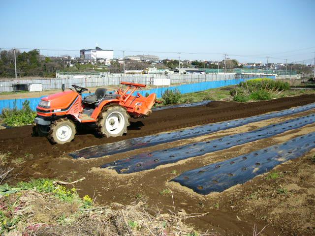 ジャガイモの発芽  丁度1ヶ月掛かりました そして今朝はひたすら 耕しました_c0222448_15383649.jpg
