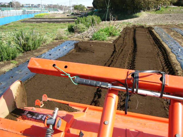 ジャガイモの発芽  丁度1ヶ月掛かりました そして今朝はひたすら 耕しました_c0222448_15392773.jpg
