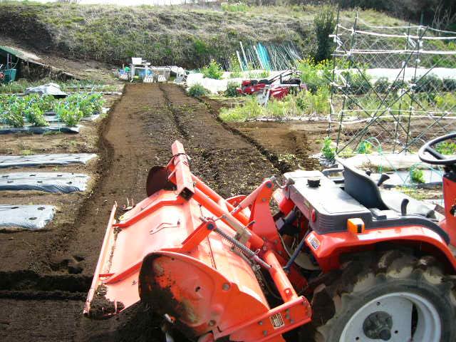 ジャガイモの発芽  丁度1ヶ月掛かりました そして今朝はひたすら 耕しました_c0222448_15563376.jpg