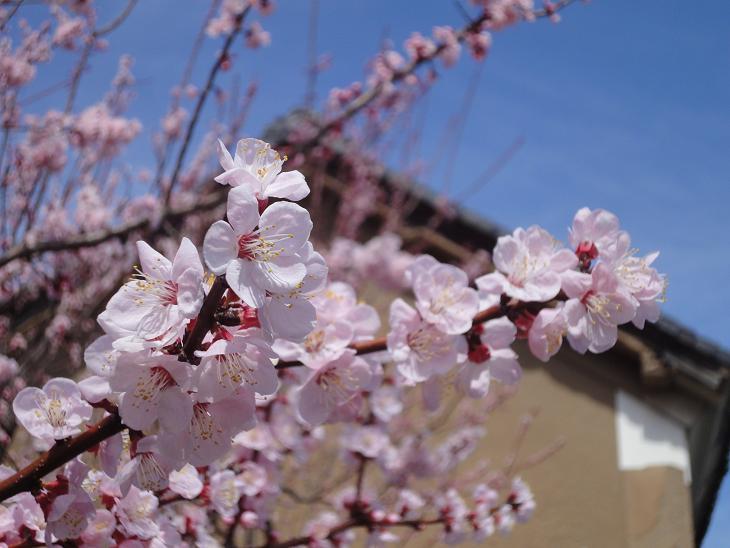 ようやく春です。_b0124462_20472535.jpg