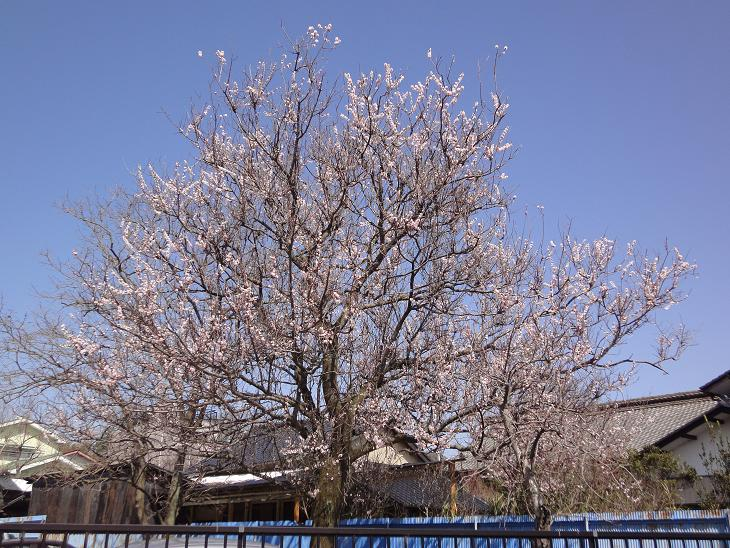 ようやく春です。_b0124462_20481077.jpg