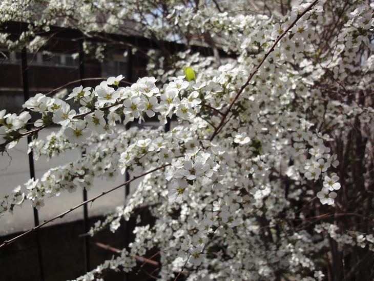 ようやく春です。_b0124462_20484563.jpg