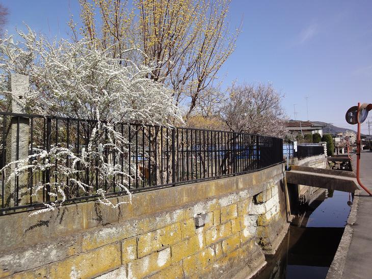ようやく春です。_b0124462_20492294.jpg