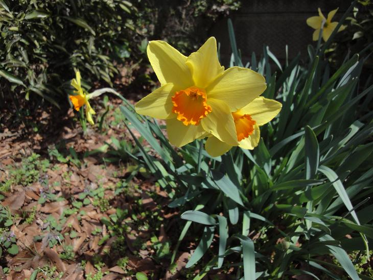 ようやく春です。_b0124462_20495639.jpg