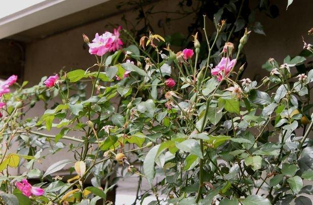 もずくのヒラヤチー  ☆雑草状態で春爛漫・・・(^m^)ゞ ♪_c0139375_154869.jpg