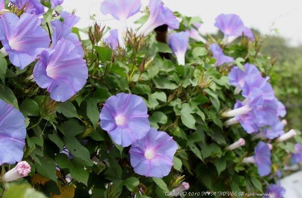 もずくのヒラヤチー  ☆雑草状態で春爛漫・・・(^m^)ゞ ♪_c0139375_15511828.jpg