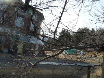 清春芸術村の桜はまだ_f0141975_1543910.jpg