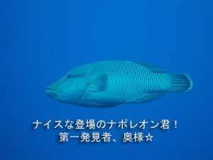 シミラン☆透明度抜群☆いかなきゃ損!!_f0144385_057355.jpg