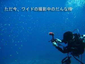 シミラン☆透明度抜群☆いかなきゃ損!!_f0144385_057366.jpg