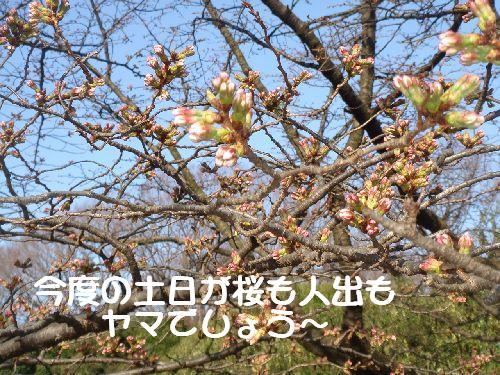 b0101991_1651111.jpg