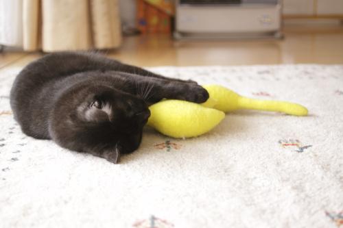 転がったまま黄猫さんを受け取った小僧