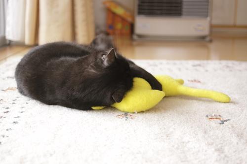 黄猫さんを抱え込んでケリケリする小僧