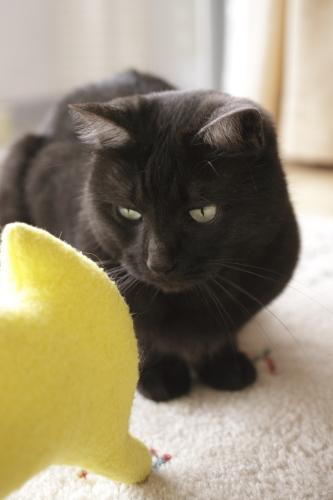 黄猫さんに尋ねる小僧