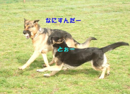 e0060693_0522974.jpg