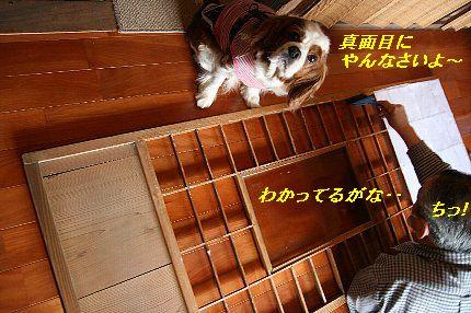 b0021297_0314413.jpg