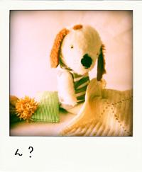 ねんねの犬ちゃん_f0187907_22595966.jpg