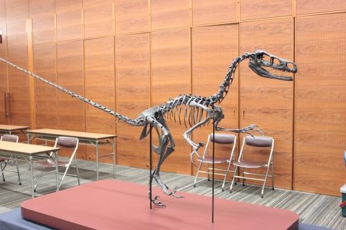 新種の恐竜!?_f0229508_17233021.jpg