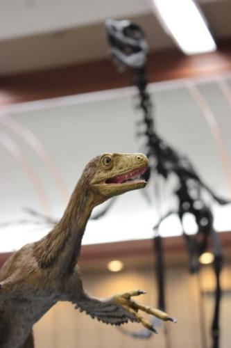 新種の恐竜!?_f0229508_17241453.jpg