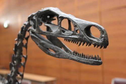 新種の恐竜!?_f0229508_1724220.jpg
