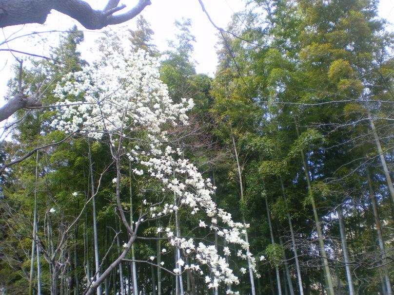 ♪春★『エッセ Spring プレゼンテーション2010』_d0004210_2159215.jpg