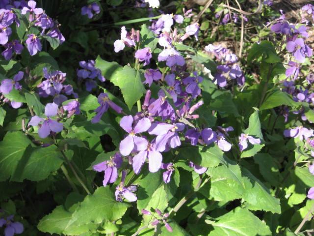 花と野菜_b0163121_7371259.jpg
