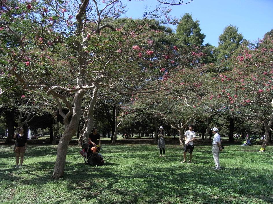 代々木公園_b0159631_2165275.jpg