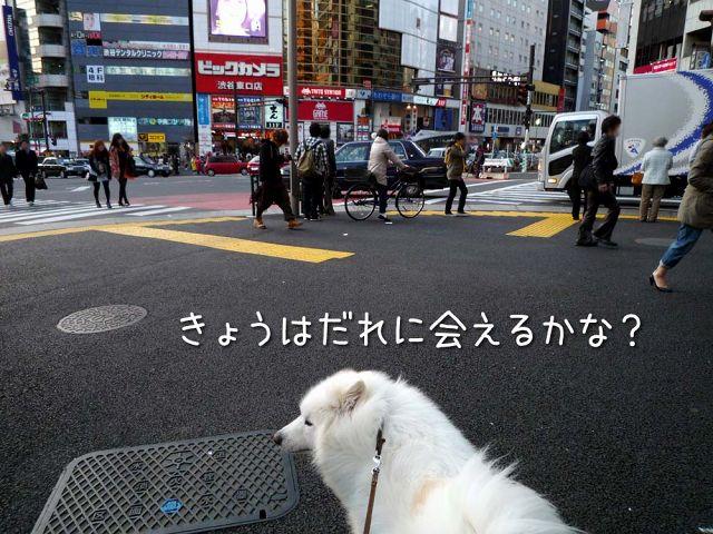きのうのおっきな公園(完全版)_c0062832_172621.jpg