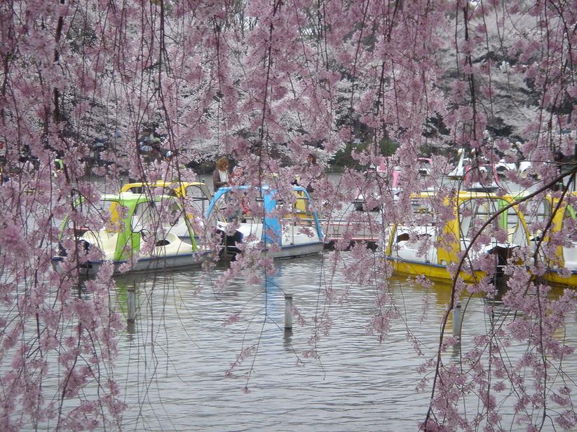 歓喜と悲哀の桜の夜明け_e0173239_5265710.jpg